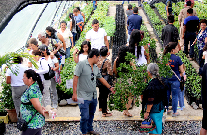 After the inauguration ceremony, people toured the greenhouse and a nearby field of small orange trees.