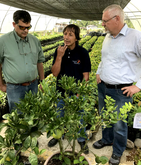 Dan Shedd, agronomist Ovidio Gomez and Hermann Schirmacher discuss a multi-grafted tree that grows several varieties of oranges.